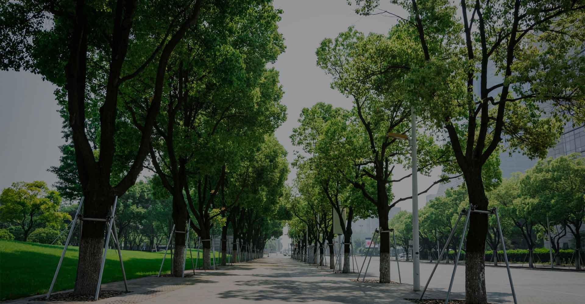 здоровья картинки деревьев на улицах король тёмных